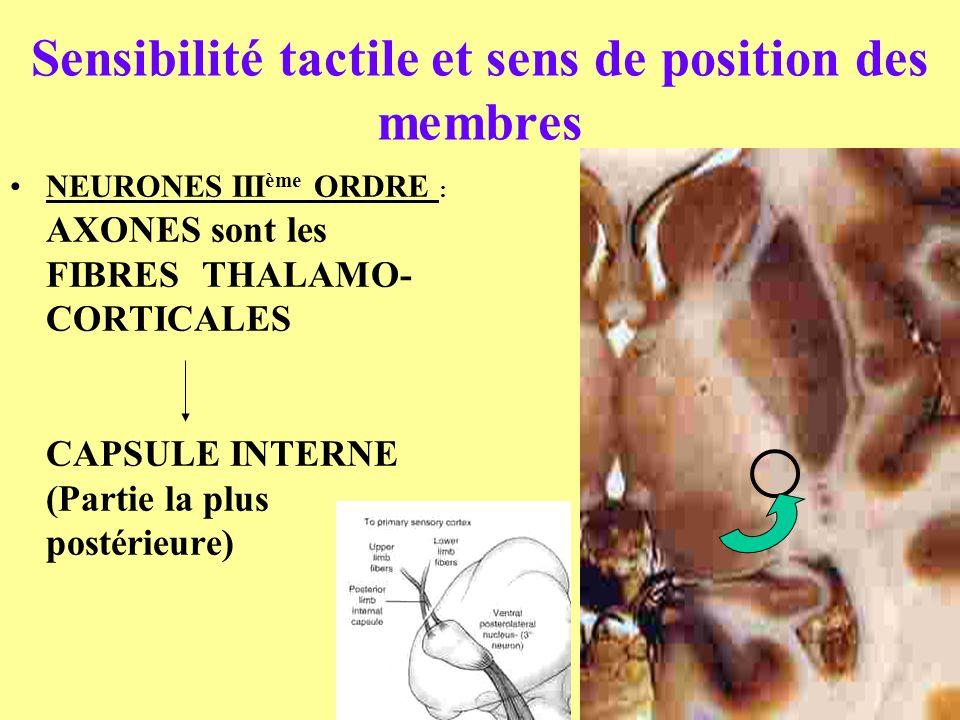 Sensibilité tactile et sens de position des membres