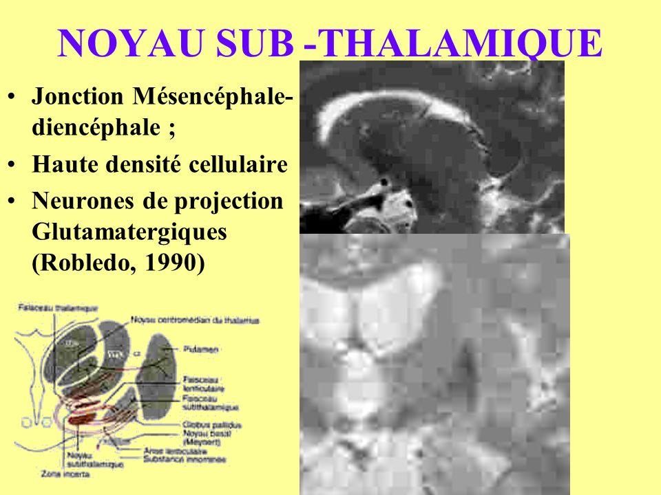 NOYAU SUB -THALAMIQUE Jonction Mésencéphale-diencéphale ;