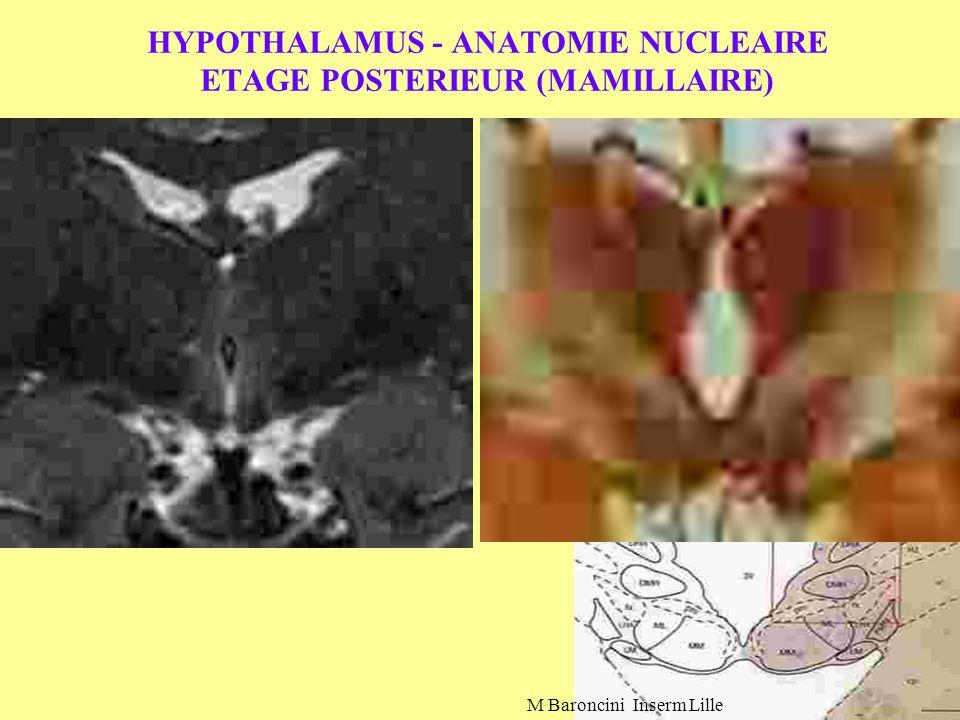 HYPOTHALAMUS - ANATOMIE NUCLEAIRE ETAGE POSTERIEUR (MAMILLAIRE)