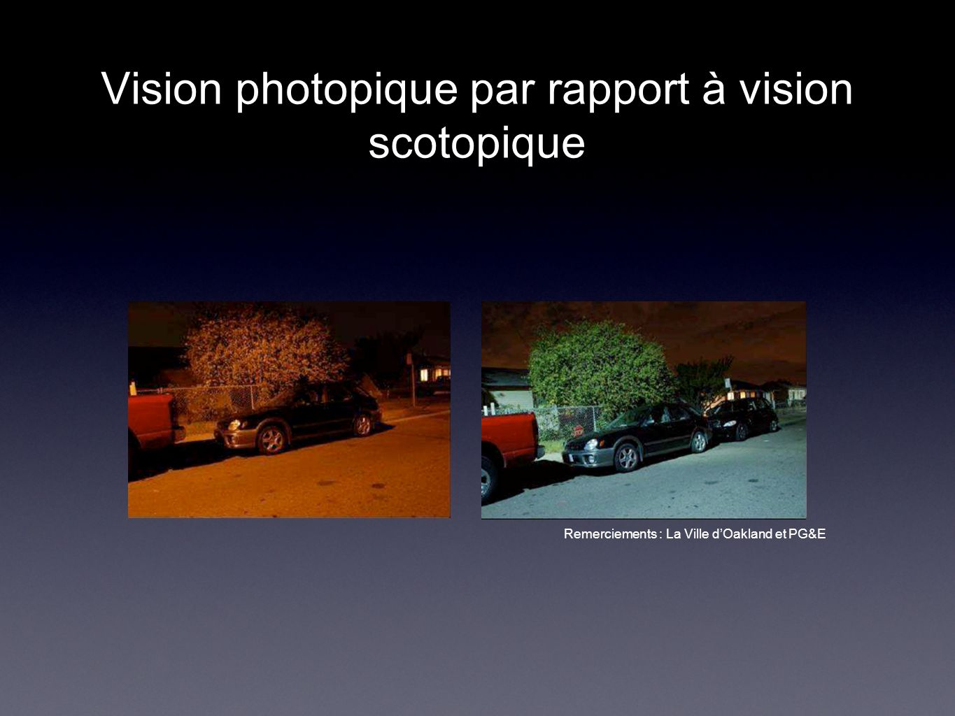 Vision photopique par rapport à vision scotopique