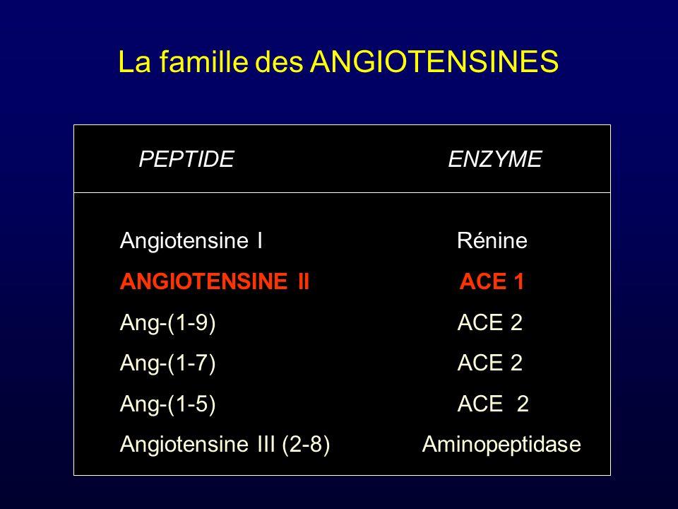 La famille des ANGIOTENSINES