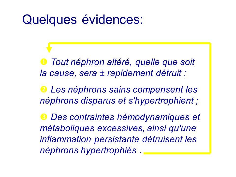Quelques évidences:  Tout néphron altéré, quelle que soit la cause, sera ± rapidement détruit ;
