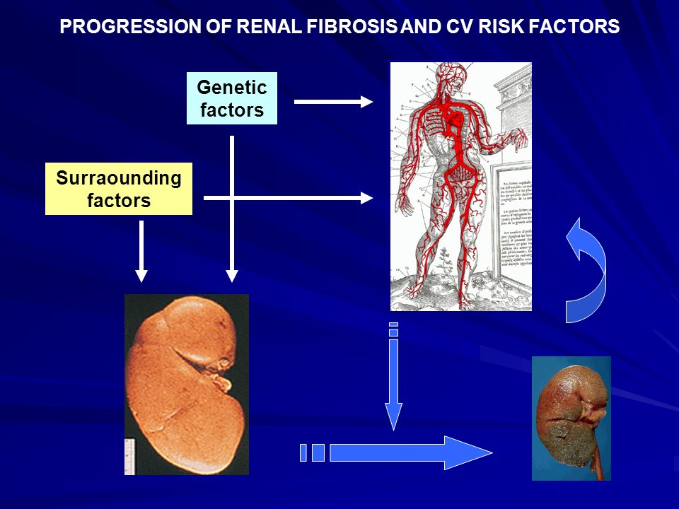 PROGRESSION OF RENAL FIBROSIS AND CV RISK FACTORS