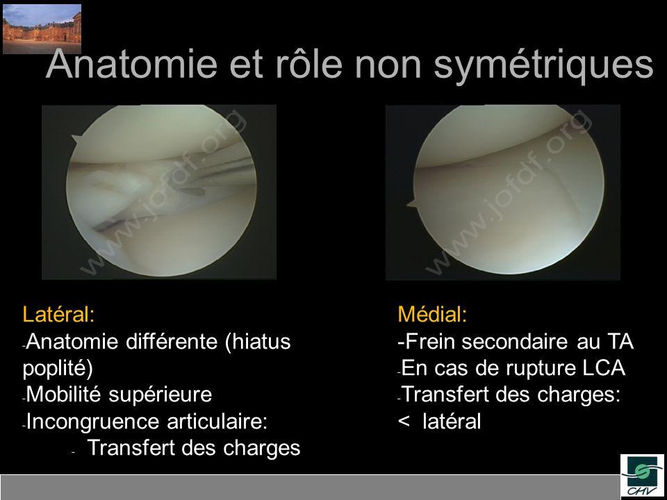 Anatomie et rôle non symétriques
