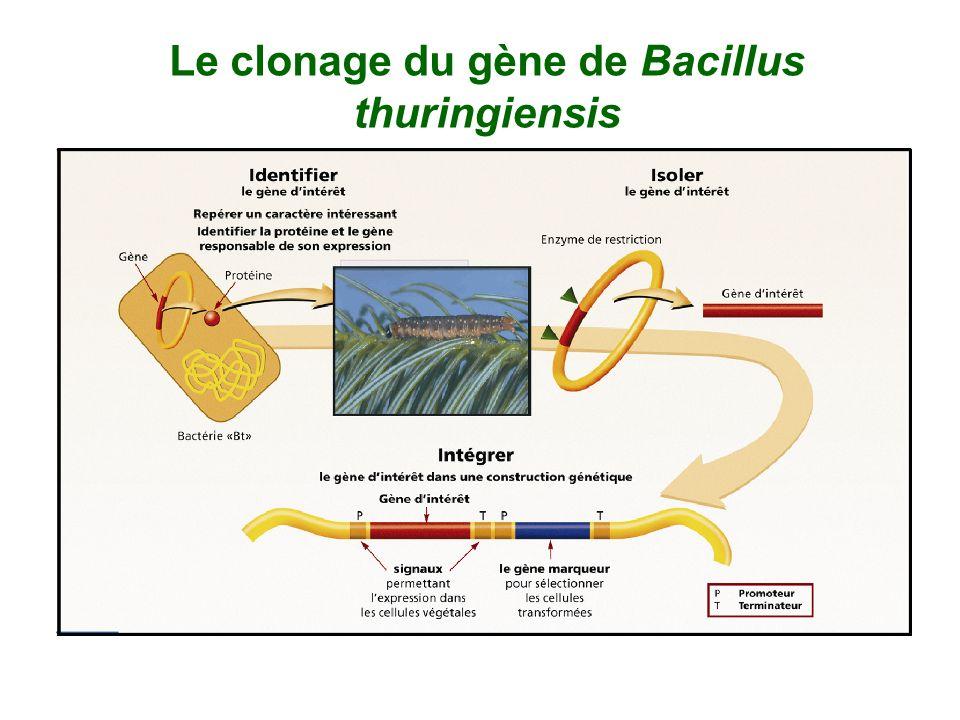 Le clonage du gène de Bacillus thuringiensis