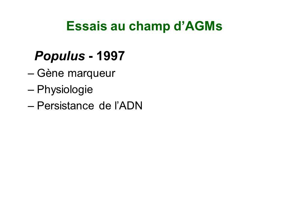 Essais au champ d'AGMs Populus - 1997