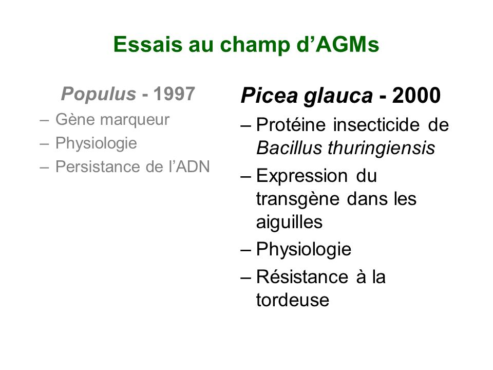 Essais au champ d'AGMs Picea glauca - 2000