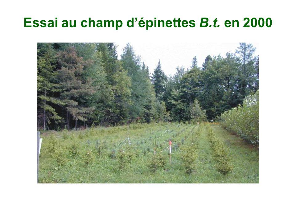Essai au champ d'épinettes B.t. en 2000