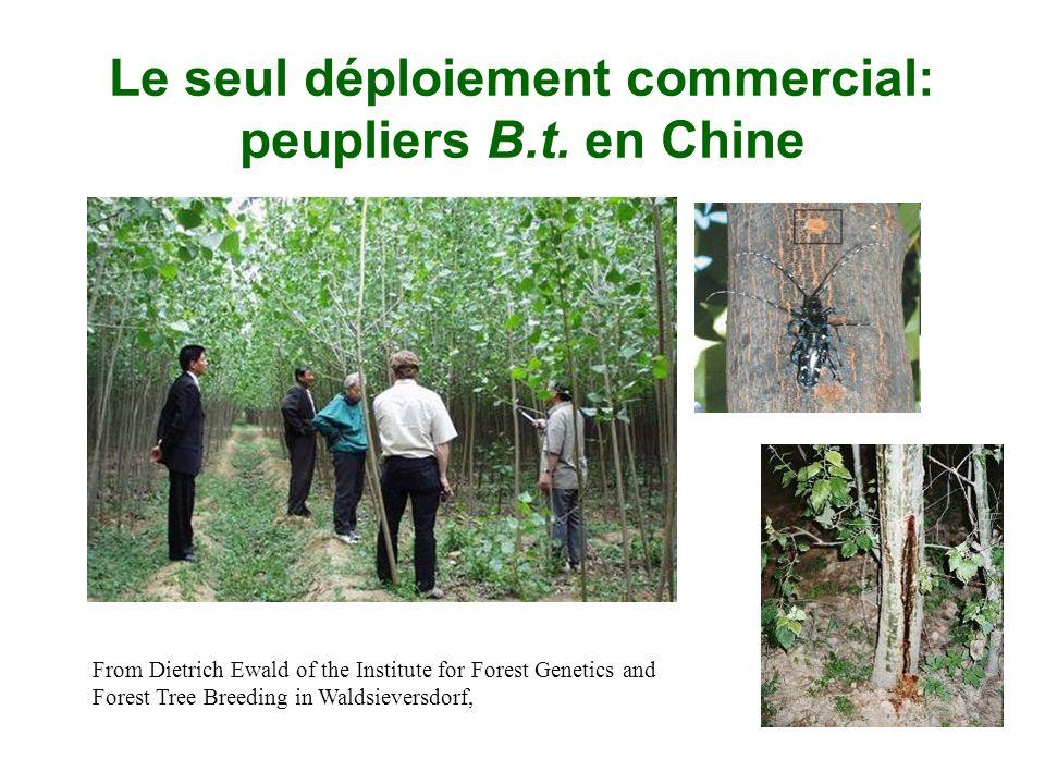 Le seul déploiement commercial: peupliers B.t. en Chine