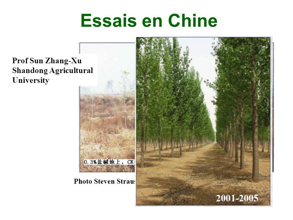 Essais en Chine Prof Sun Zhang-Xu Shandong Agricultural University