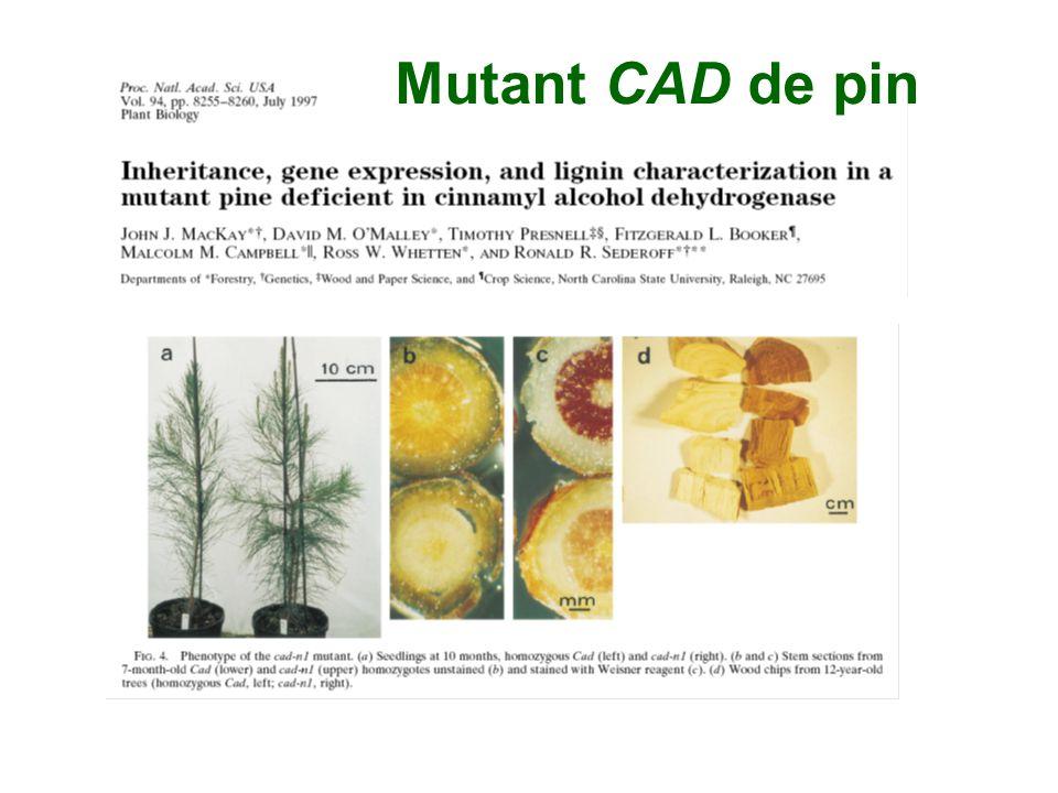 Mutant CAD de pin