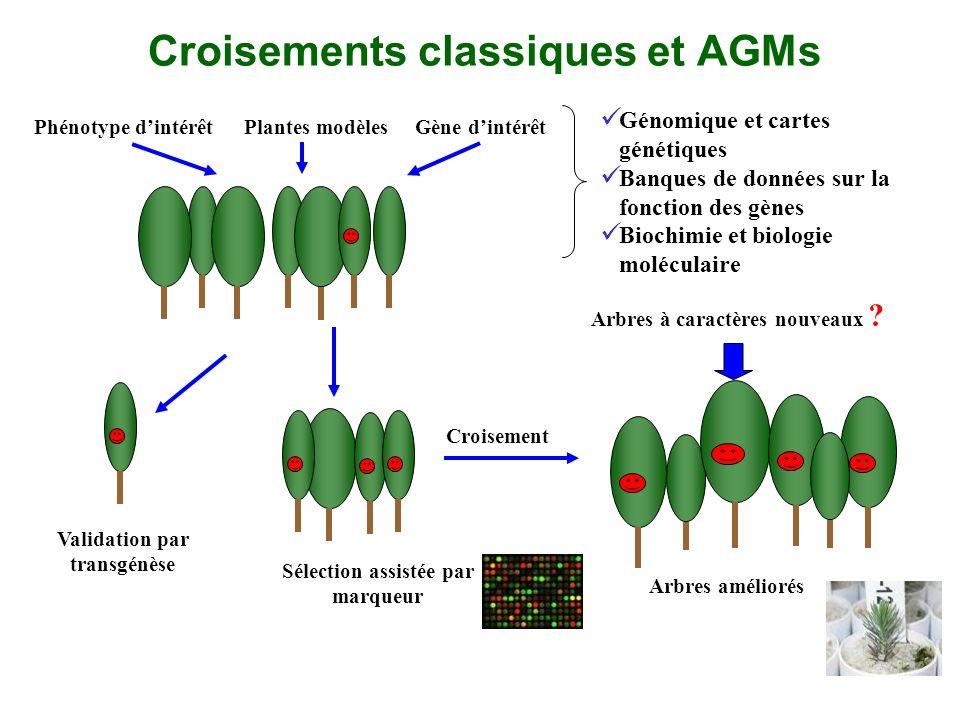 Croisements classiques et AGMs