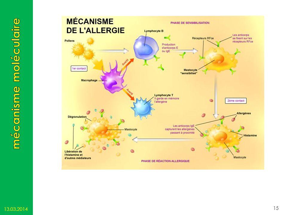 mécanisme moléculaire