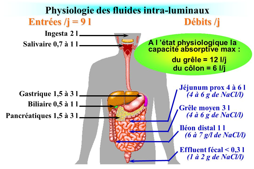 Physiologie des fluides intra-luminaux