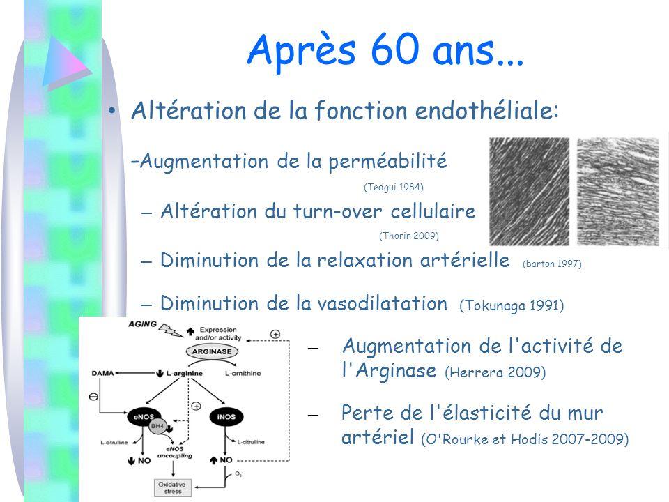 Après 60 ans... Altération de la fonction endothéliale: