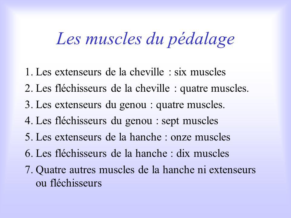 Les muscles du pédalage