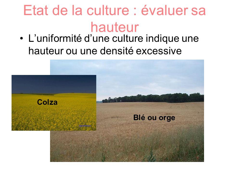 Etat de la culture : évaluer sa hauteur