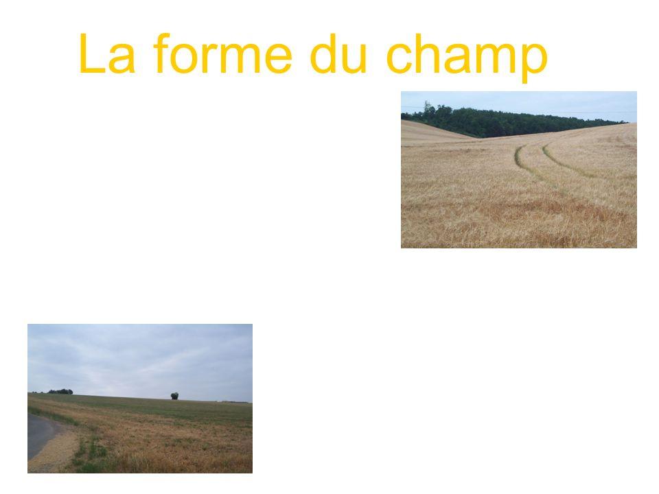 La forme du champ