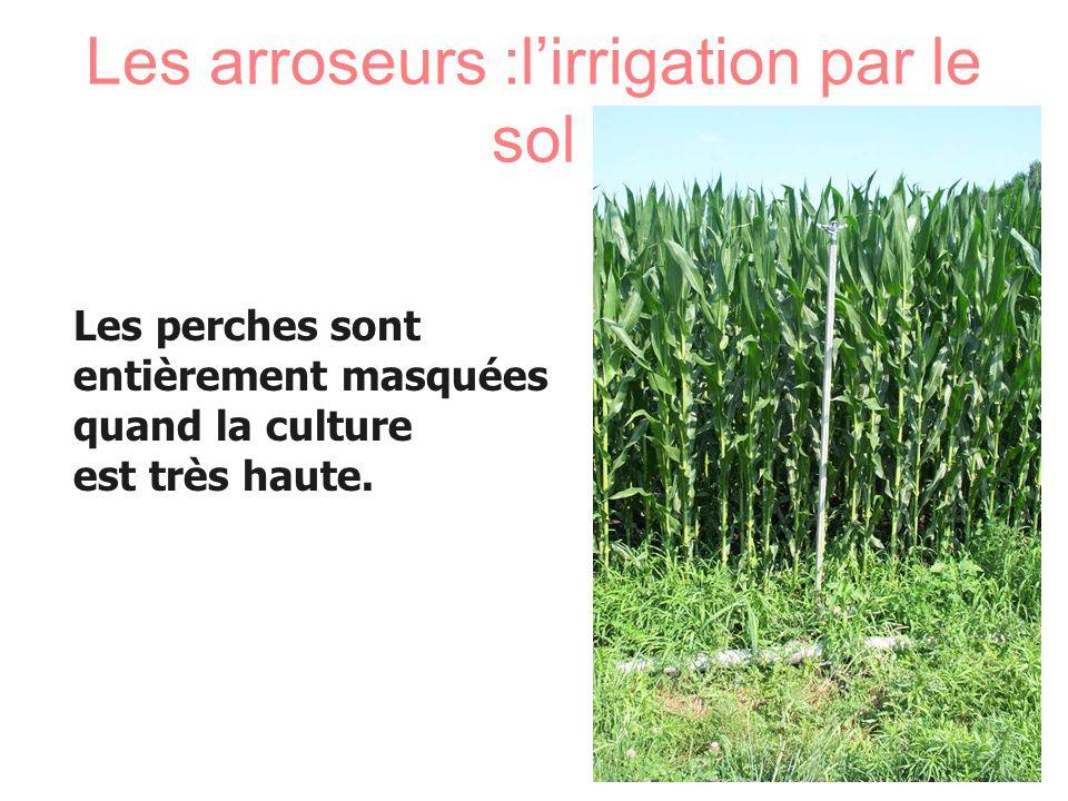 Les arroseurs :l'irrigation par le sol