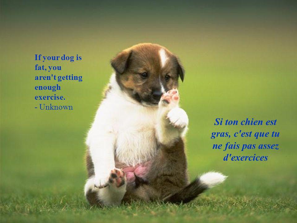 Si ton chien est gras, c est que tu ne fais pas assez d exercices