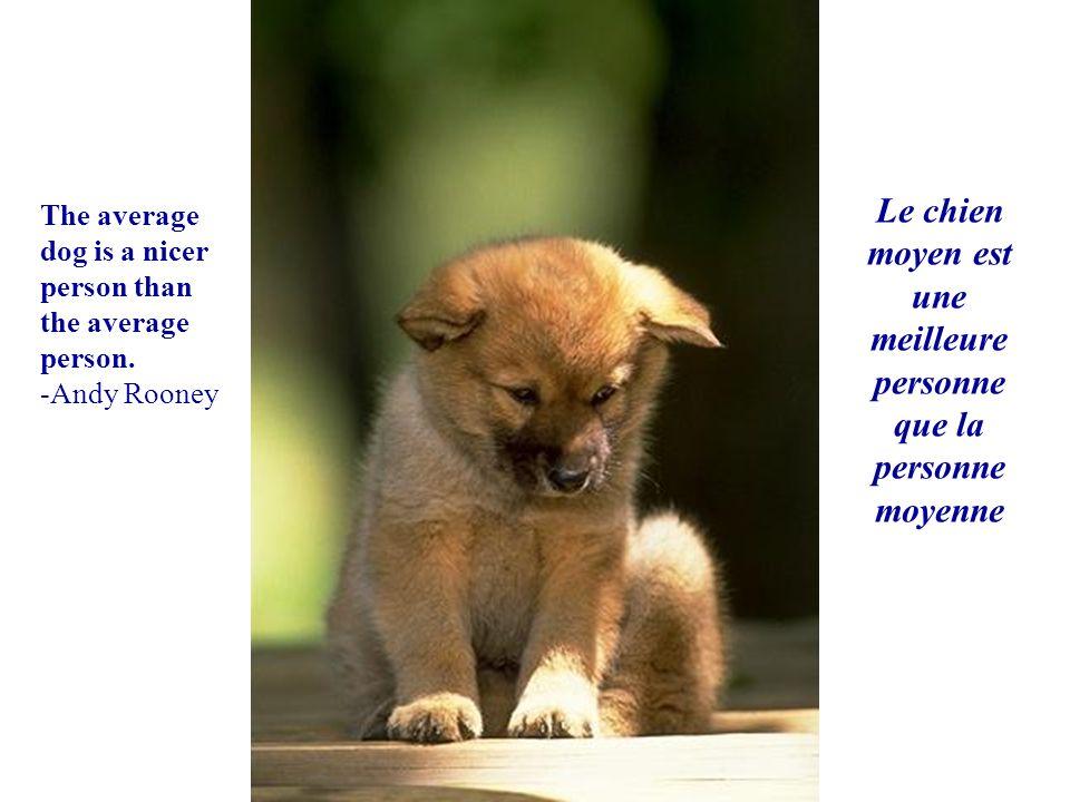 Le chien moyen est une meilleure personne que la personne moyenne