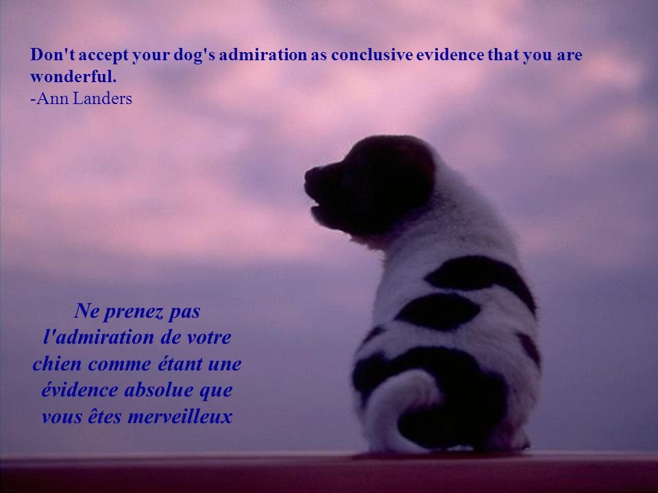 Don t accept your dog s admiration as conclusive evidence that you are wonderful.