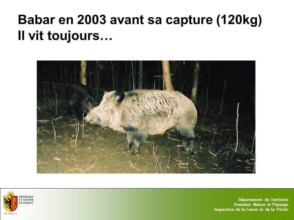 Babar en 2003 avant sa capture (120kg) Il vit toujours…