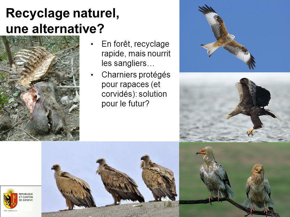 Recyclage naturel, une alternative