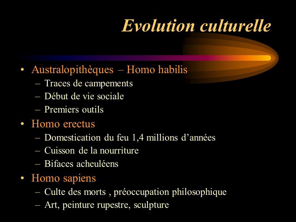 Evolution culturelle Australopithèques – Homo habilis Homo erectus