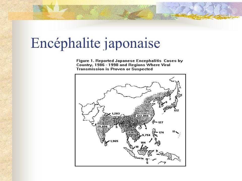 Encéphalite japonaise