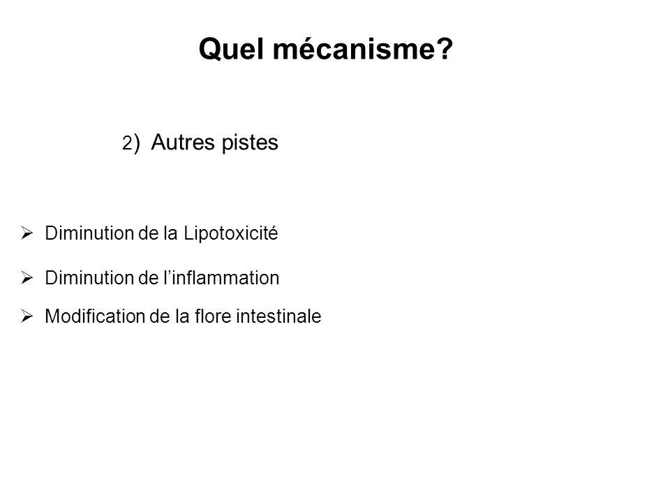 Quel mécanisme 2) Autres pistes Diminution de la Lipotoxicité