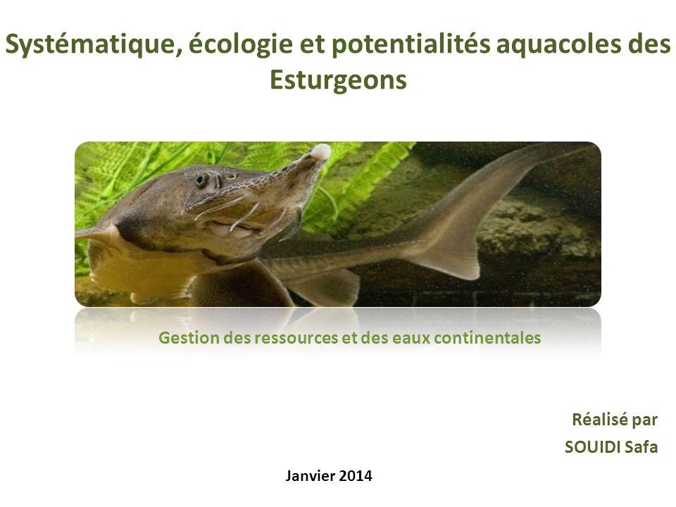 Systématique, écologie et potentialités aquacoles des Esturgeons