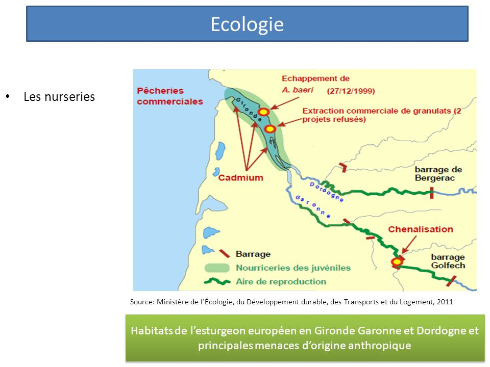 Ecologie Les nurseries
