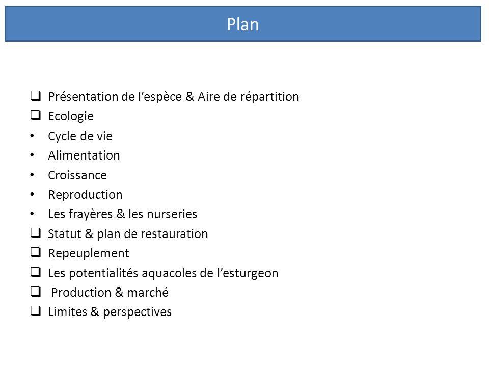Plan Présentation de l'espèce & Aire de répartition Ecologie