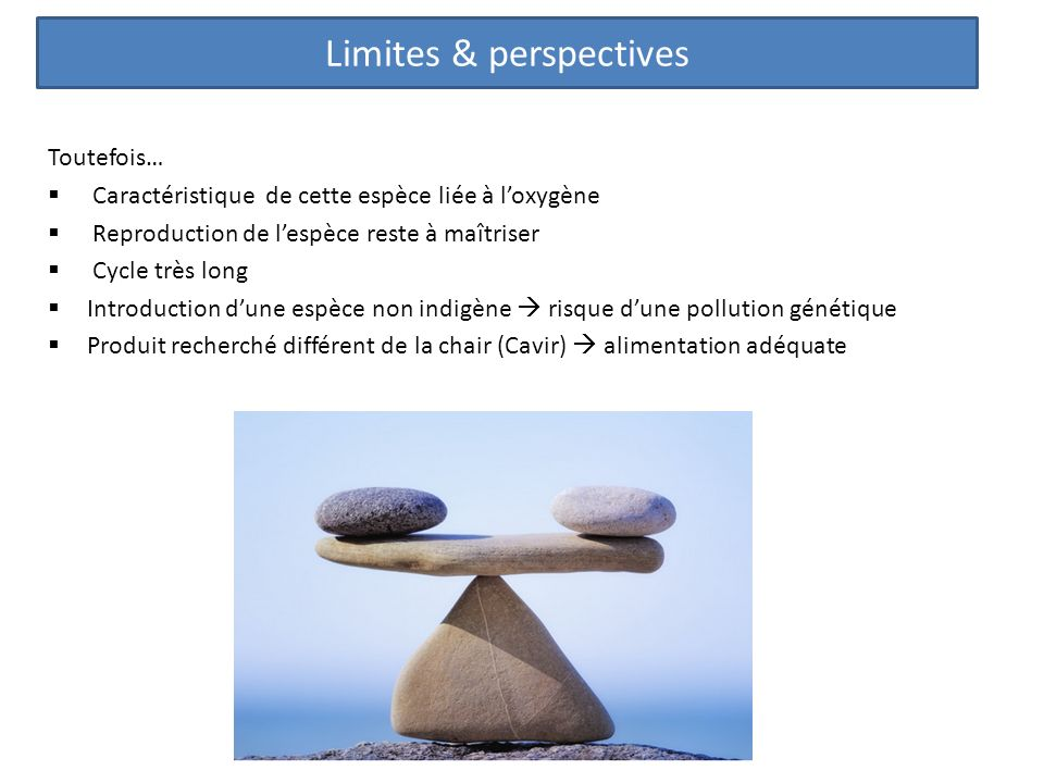 Limites & perspectives