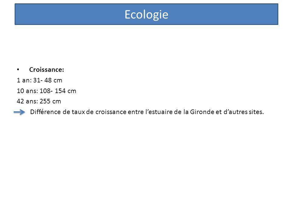 Ecologie Croissance: 1 an: 31- 48 cm 10 ans: 108- 154 cm