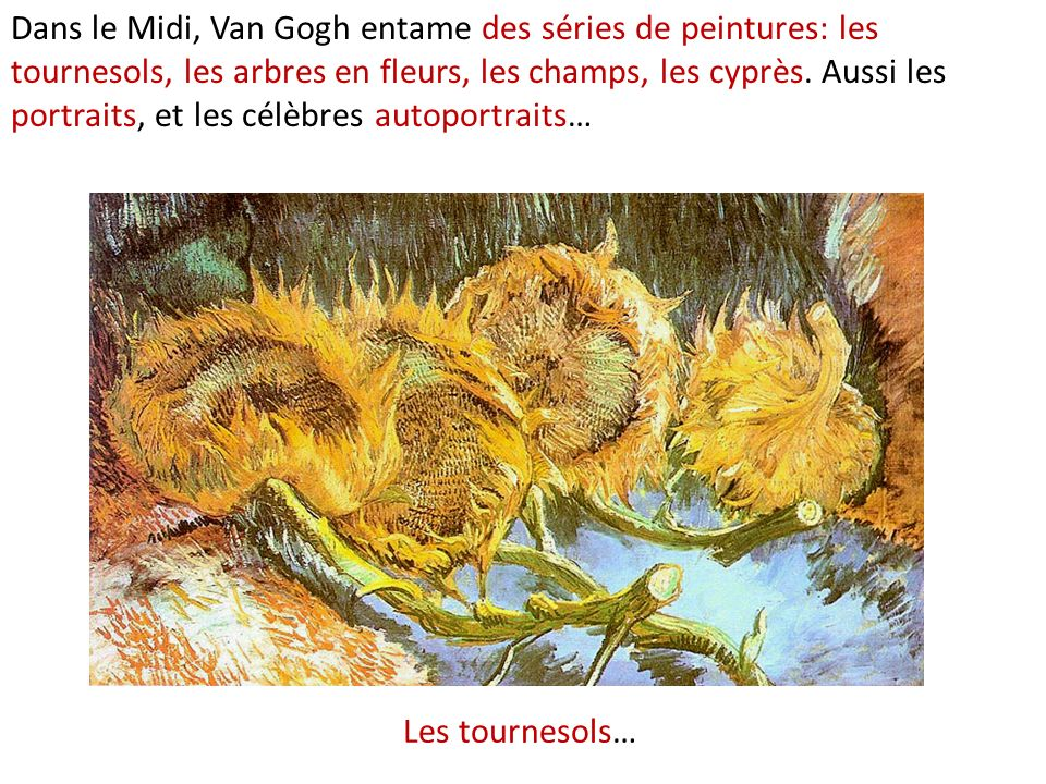 Dans le Midi, Van Gogh entame des séries de peintures: les tournesols, les arbres en fleurs, les champs, les cyprès. Aussi les portraits, et les célèbres autoportraits…