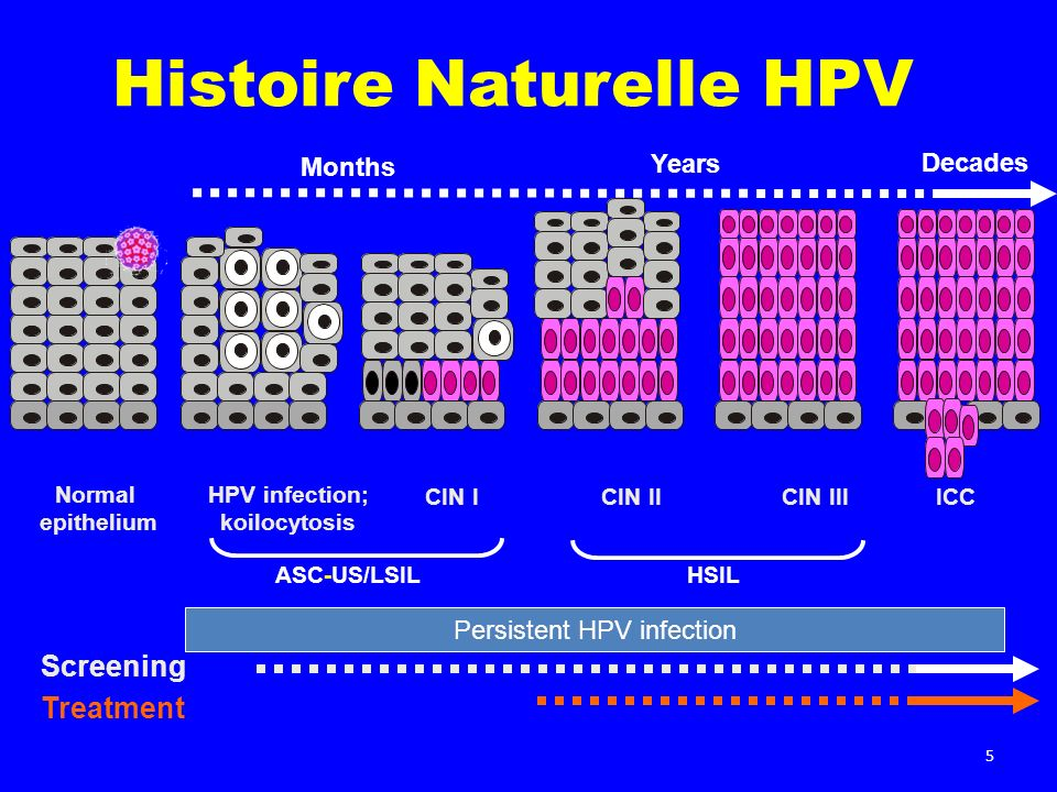 Histoire Naturelle HPV