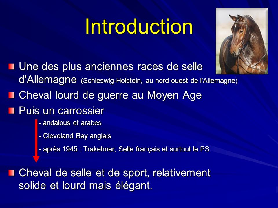 Introduction Une des plus anciennes races de selle d Allemagne (Schleswig-Holstein, au nord-ouest de l Allemagne)