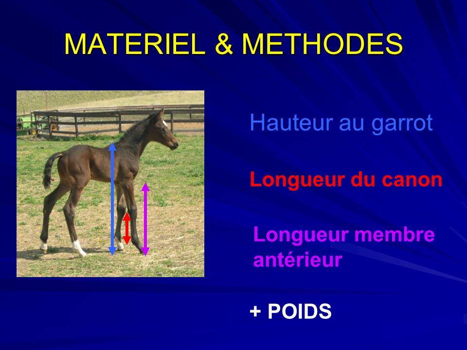 MATERIEL & METHODES Hauteur au garrot Longueur du canon