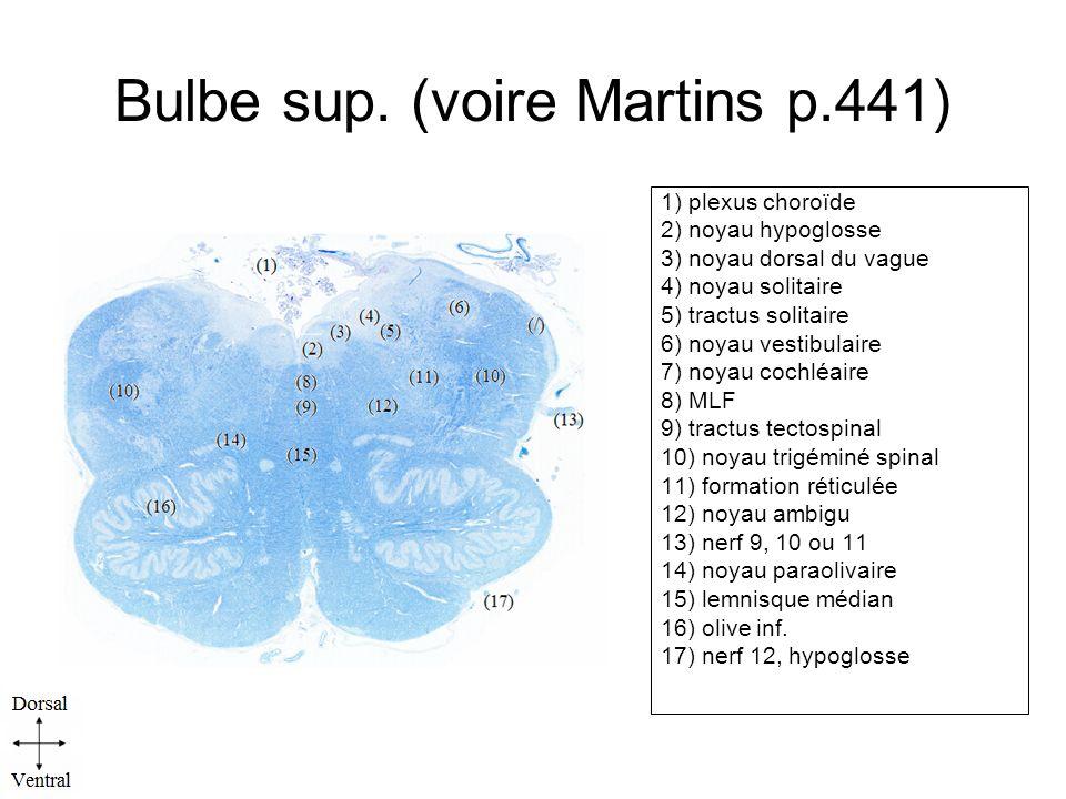 Bulbe sup. (voire Martins p.441)