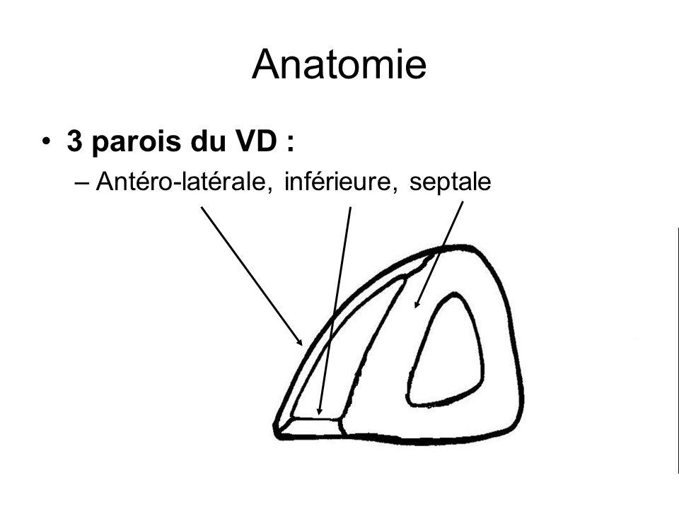 Anatomie 3 parois du VD : Antéro-latérale, inférieure, septale