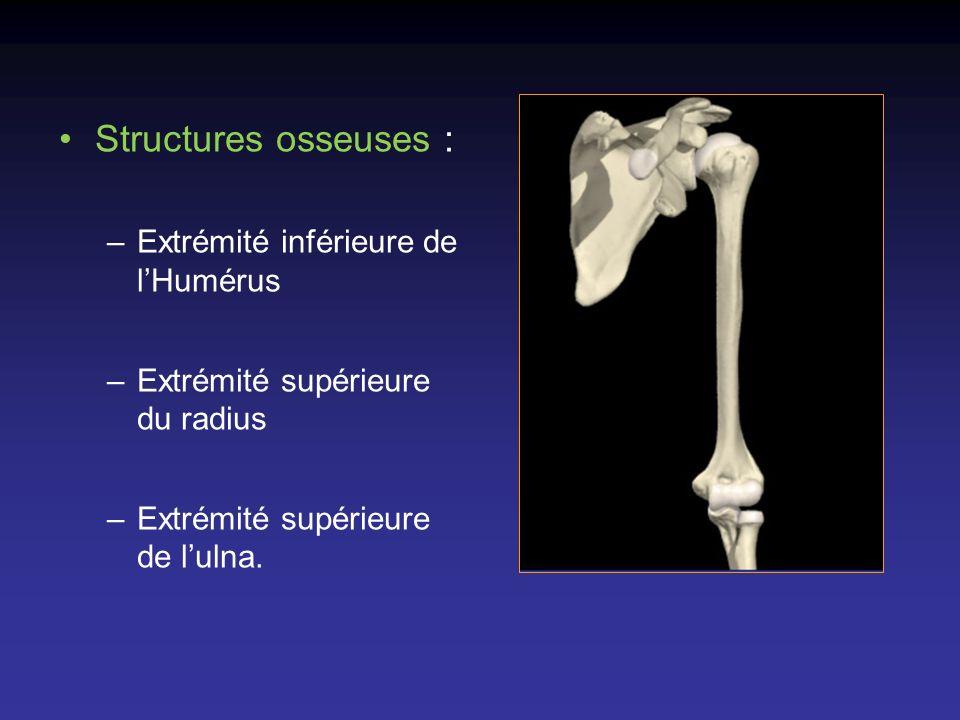 Structures osseuses : Extrémité inférieure de l'Humérus