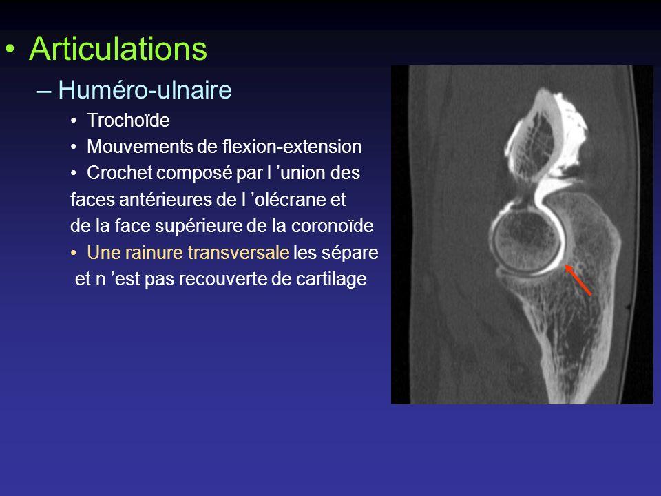 Articulations Huméro-ulnaire Trochoïde Mouvements de flexion-extension