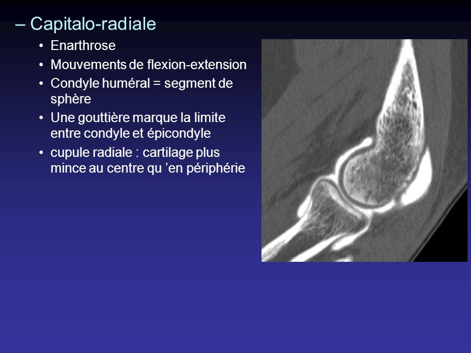 Capitalo-radiale Enarthrose Mouvements de flexion-extension