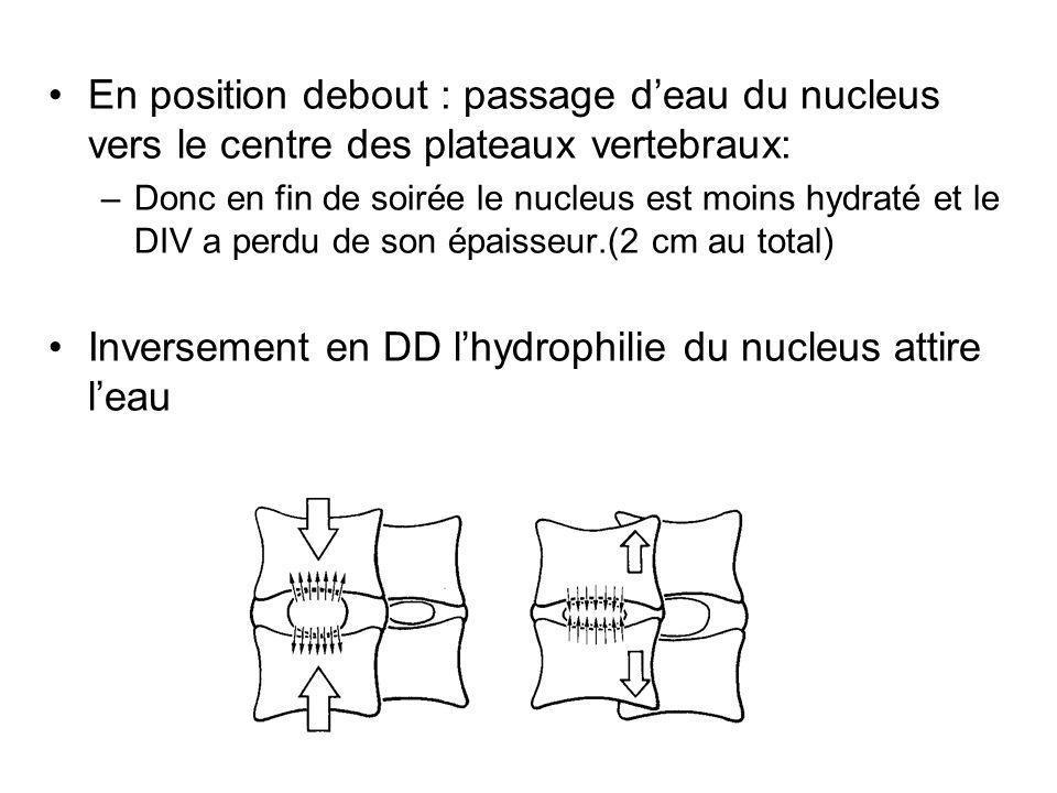 Inversement en DD l'hydrophilie du nucleus attire l'eau