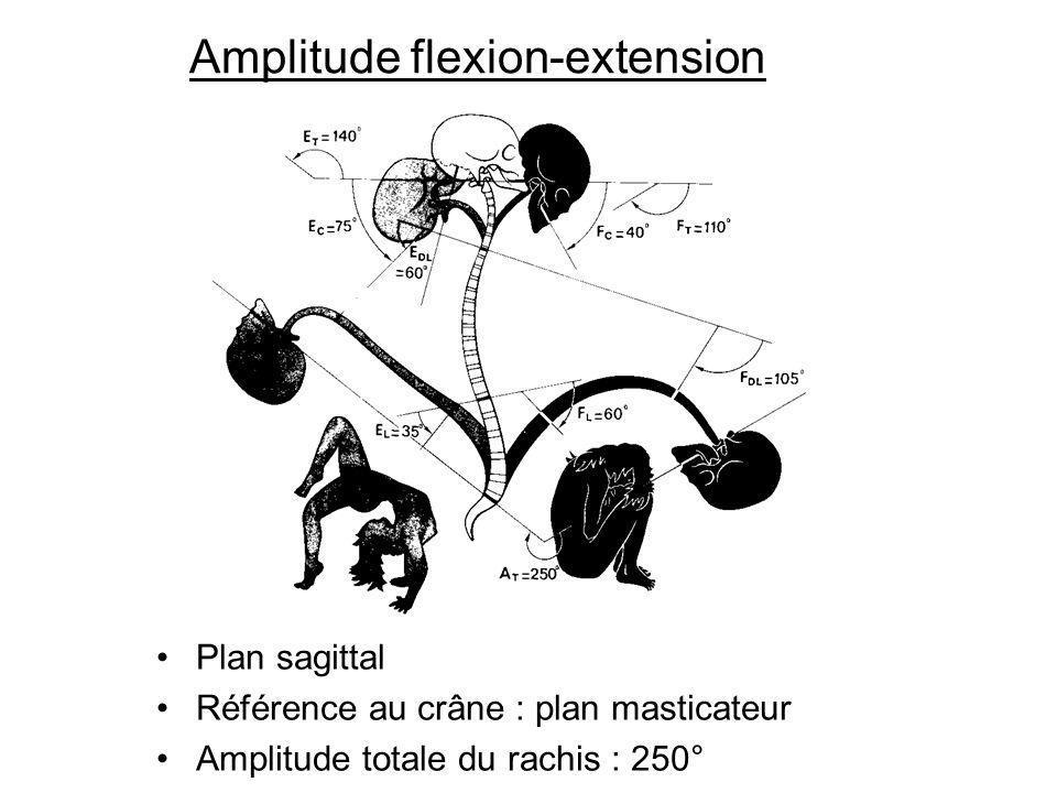 Amplitude flexion-extension