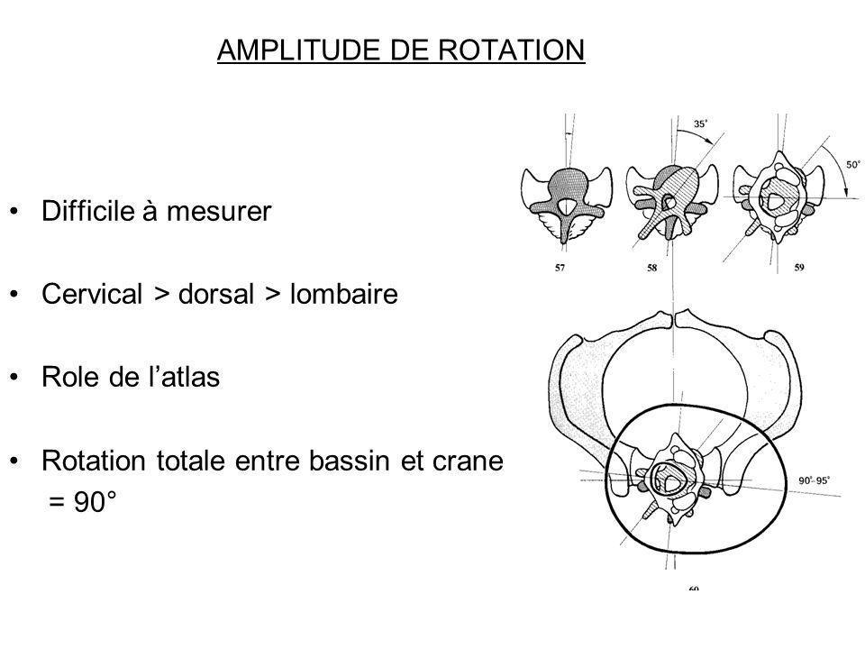AMPLITUDE DE ROTATION Difficile à mesurer. Cervical > dorsal > lombaire. Role de l'atlas. Rotation totale entre bassin et crane.