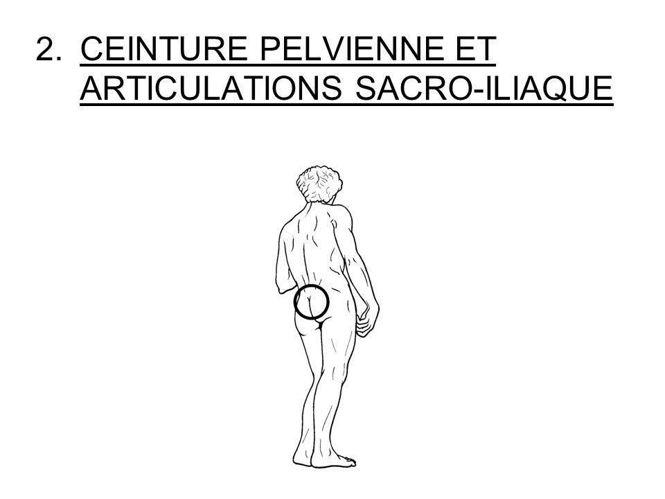 CEINTURE PELVIENNE ET ARTICULATIONS SACRO-ILIAQUE