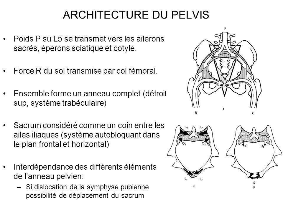 ARCHITECTURE DU PELVIS